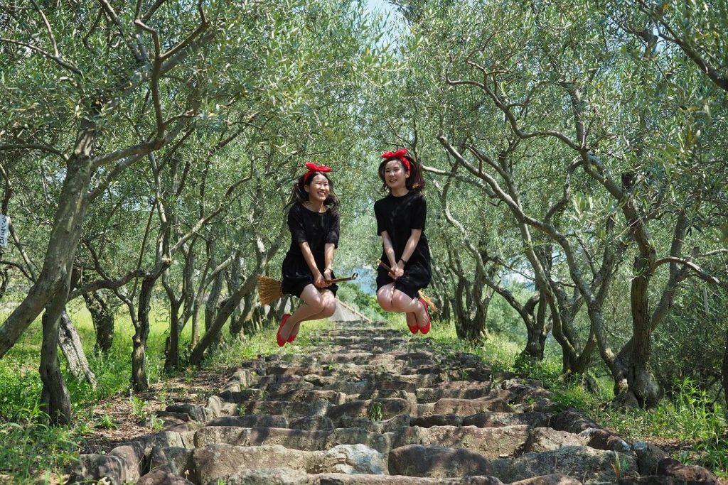 階段脇に植えられたオリーブの古木の並木。<br/>階段での撮影は難易度が高い