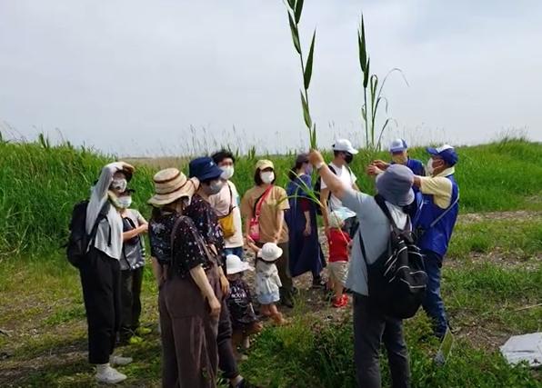 第2会場では、隣接する渡良瀬遊水地で自然観察会を実施。 自生している植物や多様な自然環境について解説している